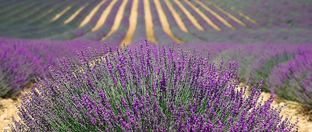 Mirisima protiv stresa
