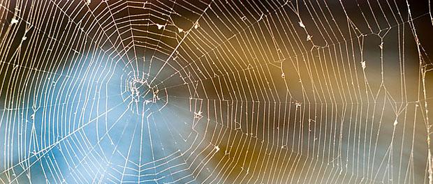 Rešite se paukova u stanu