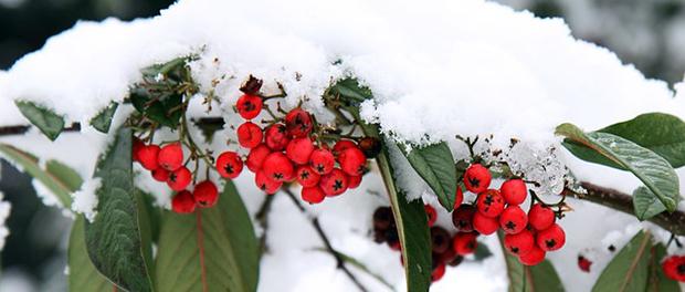 Januar u dvorištu i bašti
