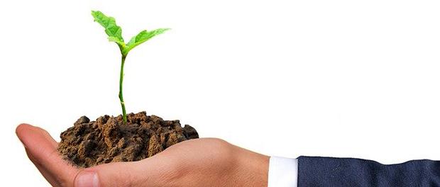 Odgajite cveće iz semena