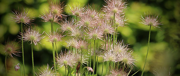 Izbegnite sušenje biljaka tokom leta
