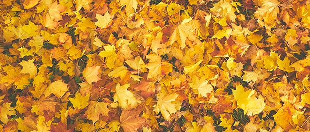 Dekorišite stan jesenjim lišćem