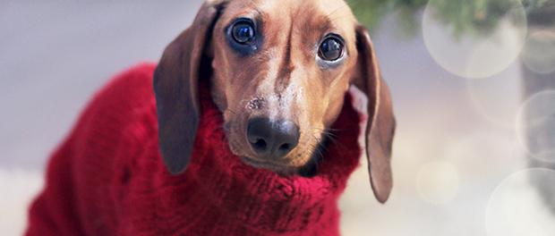 Da li je vašem psu potrebna odeća