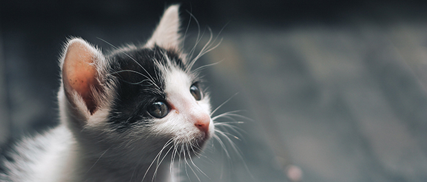 Prednosti mačke kao kućnog ljubimca